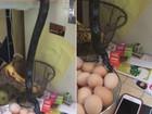 Vídeo incrível mostra cobra atacando cesta de ovos em casa nos EUA
