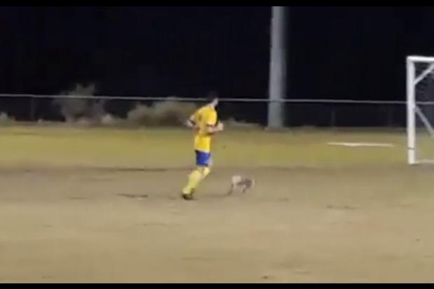 Coala invade campo durante partida de futebol na Austrália (Foto: Reprodução/Youtube)