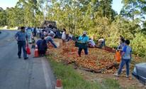 População leva caixas de tomates de caminhão tombado em rodovia (Juliano Cidro/ Sudoeste Notícias)