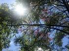 Outono chega, mas calor deve continuar em Goiás, diz Inmet