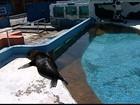 Lobo-marinho encontrado em praia do ES é levado a zoológico do RJ