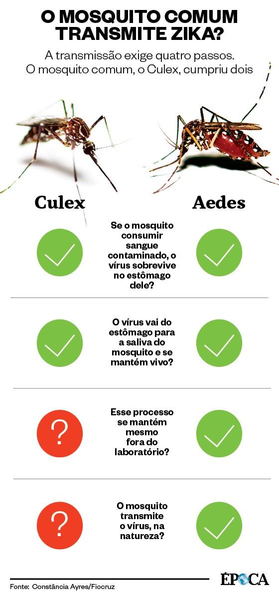 Infográfico Culex - Aedes (Foto: ÉPOCA)