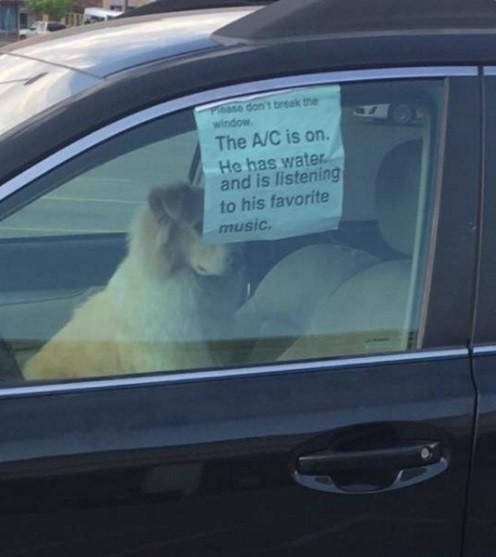 O motorista deixou mensagem garantindo que o cão estava bem