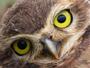 Falcoaria é um dos destaques do Terra da Gente