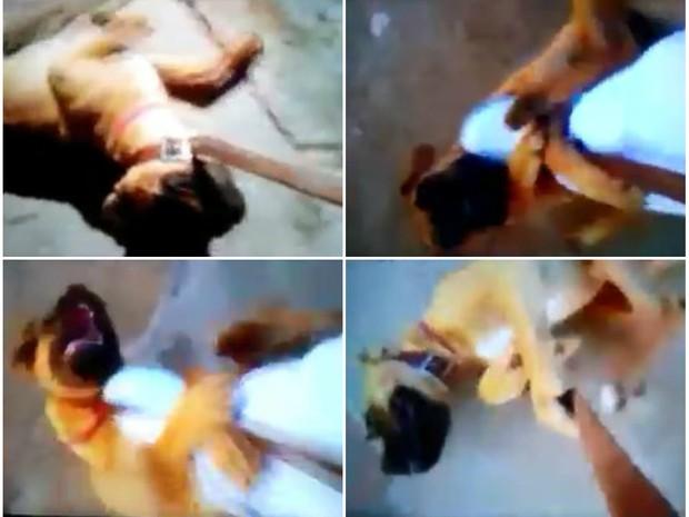 Cadela da raça boxer foi agredida por dona em Pirassununga (SP) (Foto: Reprodução/Facebook)