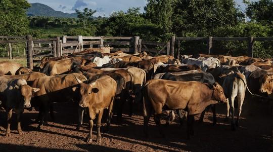 Fazenda de gado, no Pará. Estado tem o segundo maior rebanho do país (Foto: Filipe Redondo/ÉPOCA)