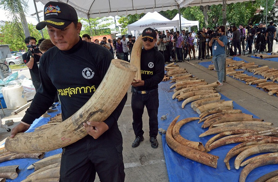 Policiais da Tailândia apreenderam três toneladas de marfim que, provavelmente, seria revendido à China ou Vietnã (Foto: Pornchai Kittiwongsakul/AFP)