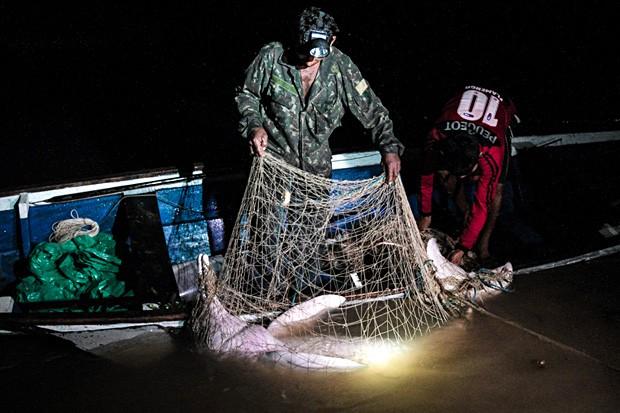Durante pesca noturna, um boto-vermelho é aprisionado em uma rede (Foto: Ampa)
