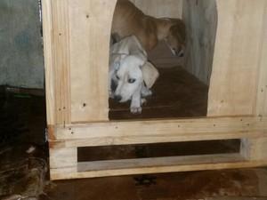 ACV casas palhetes cachorros Ibiá (Foto: ACV/Divulgação)