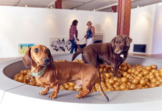 Inglês cria exposição de arte contemporânea para cachorros (Foto: Divulgação)