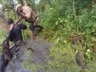 Cão que achou ladrão em pântano, morte em roleta-russa; veja mais lidas