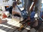Ataques de tubarão aumentaram 25% no mundo, mostra levantamento