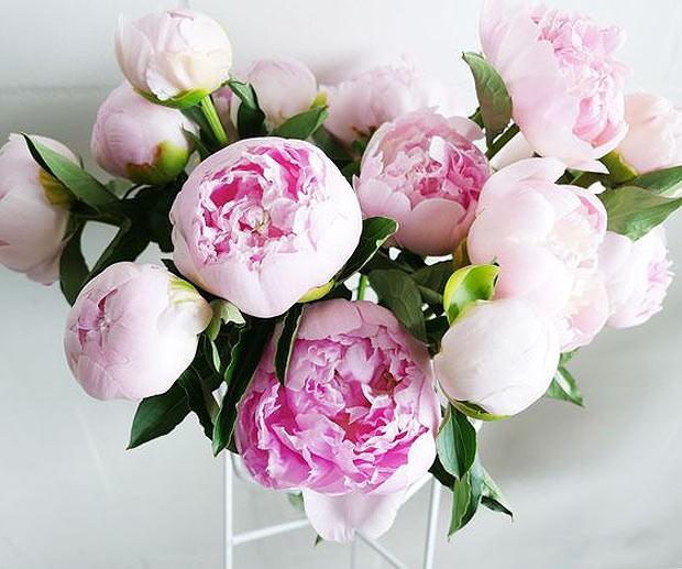 3-flor-com-botoes-fechados (Foto: Reprodução/Pinterest)