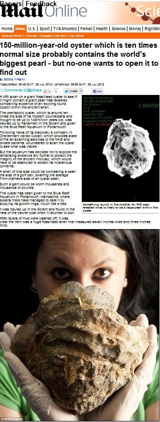 fóssil da Ostra (Foto: Reprodução/Daily Mail)