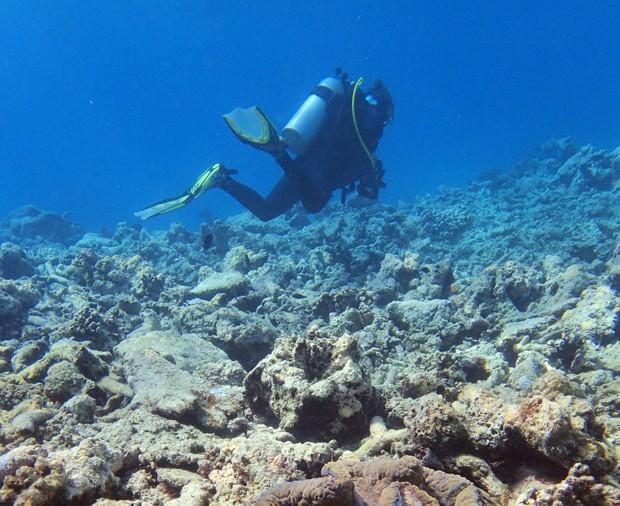 Segundo pesquisadores, muitos corais da Grande Barreira na Austrália continuam morrendo por doenças ou pela ação de predadores (Foto: Greg Torda/Australian Research Council Centre of Excellence for Coral Reef Studies/AFP)