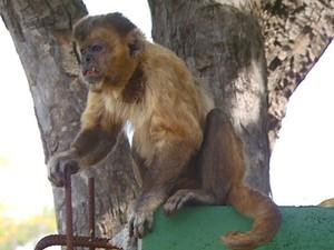 Macacos fogem de zoológico em Sumaré (Foto: Reprodução / EPTV)