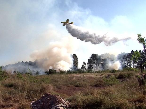Avião foi usado para ajudar no combate às chamas em área verde em Ribeirão Preto, SP (Foto: Reprodução/EPTV)