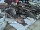 Quilo de peixe tambaqui é vendido em média, por R$ 5,01 em Rondônia