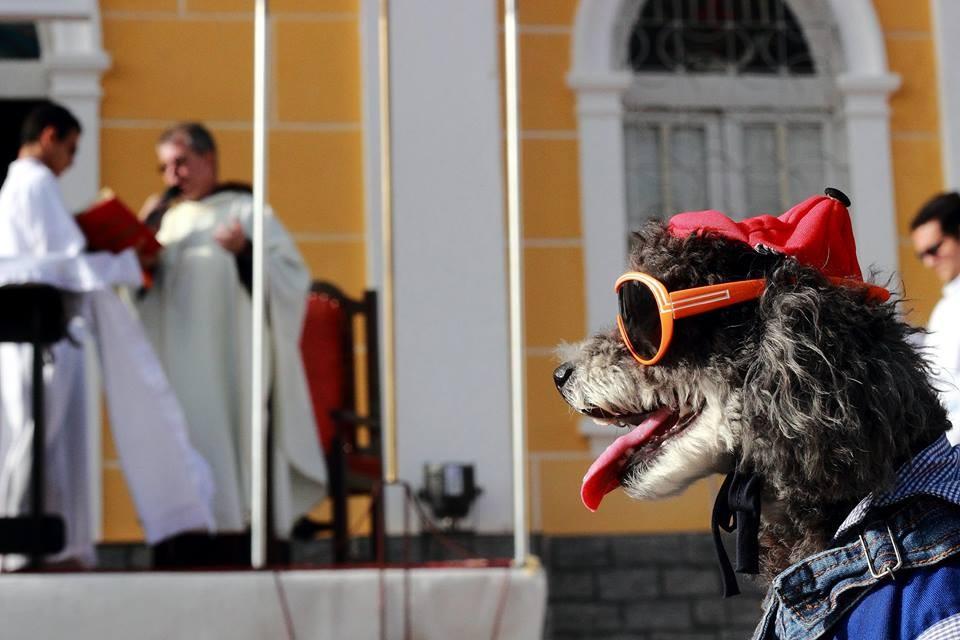 Cães recebem bênção no Dia de São Francisco de Assis, em Parnaíba, Litoral do Piauí (Foto: Gustavo Pereira/Arquivo Pessoal)