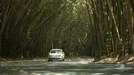 CCR é multada por suposto desmatamento irregular do bambuzal do aeroporto