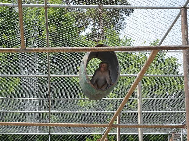 Macacário do Instituto Butantan em imagem de 2011 (Foto: Maria Teresa Valentini/Instituto Butantan)