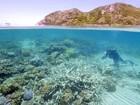 Grande Barreira de Coral australiana apresenta sinais de desbotamento