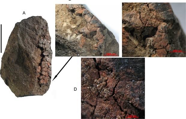 Detalhe de resídos de tinta mesclada com leite em rocha encontrada na África do Sul (Foto:  Divulgação/Plos ONE)