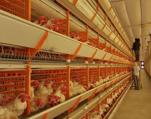 Granja produz 200 mil ovos no município de Valência (Foto: Reprodução/TV Clube)