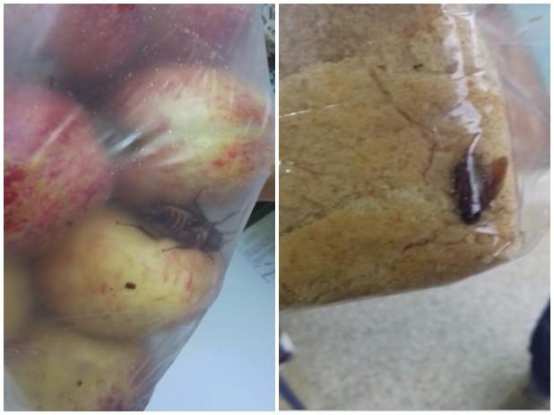 Inseto foi achado em meio à maçãs e pães; prefeitura confirma (Foto: Reprodução/ TV TEM)