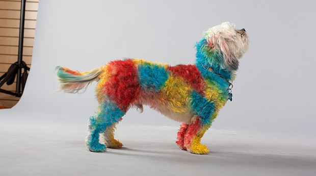 Cachorro pintado com a tinta especial (Foto: Divulgação)