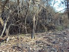 Polícia Ambiental de Marília multa usina por incendiar vegetação nativa