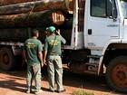 Força Nacional reforça operação contra desmatamento em MT