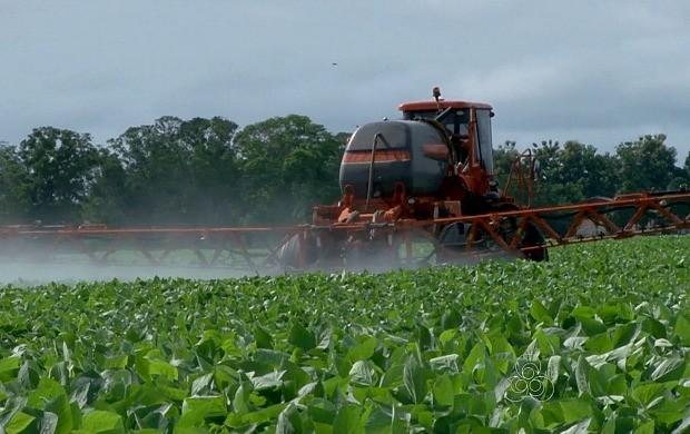 Colheita de Soja deve movimentar economia de Rondônia (Foto: Bom Dia Amazônia)