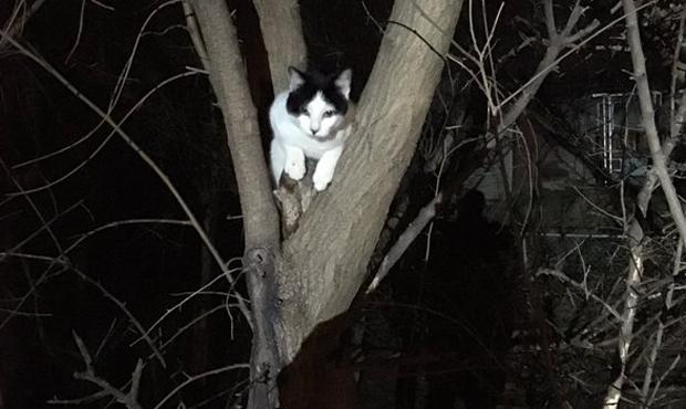 Polícia usa laser e escudo à prova de balas para resgatar gato de árvore (Foto: @ofctmarkowsky/Twitter)