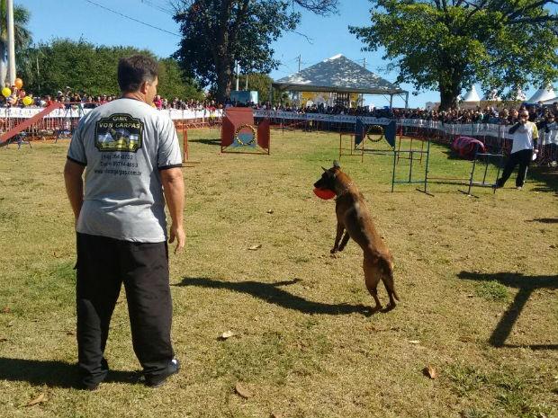 Cão aprende comandos de obediência, cumpre os desafios e é recompensado (Foto: Mariana Bonora/G1)