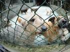 Evento musical arrecada rações para cães e gatos de abrigos em Bauru