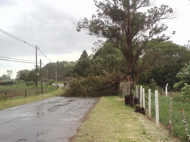 De acordo com a polícia, pelo menos 10 árvores caíram em C. do Monte Alegre (Foto: Franciane Duque / TEM Você)