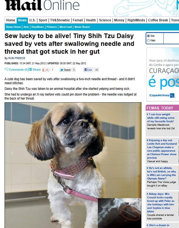 Cadela Shih Tzu passou por cirurgia após engolir agulha de cinco centímetros. (Foto: Reprodução/Daily Mail)