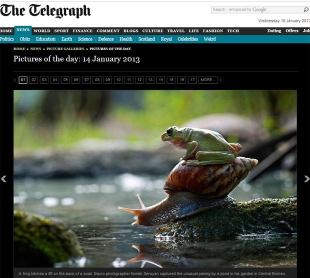 Sapo foi flagrado pegando 'carona' em um caracol (Foto: Reprodução/Daily Telegraph)