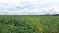 Mato Grosso registra novos casos de ferrugem na soja