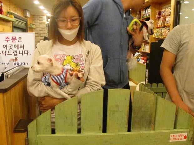 Bau House, café para cães em Seul, na Coreia (Foto: Daniela Braun/G1)