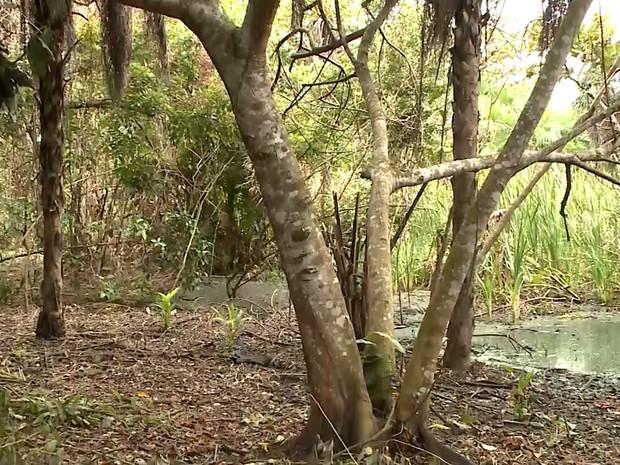 Crescimento imobiliário avançou e colocou em risco a Lagoa das Garças em Imperatriz (MA) (Foto: Reprodução/TV Mirante)