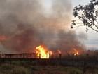 Incêndio atinge área de vegetação próxima ao Aeroporto de Goiânia