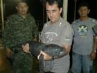 Abandonado há três dias, filhote de peixe-boi é resgatado no Amazonas