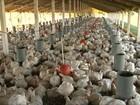 Seca afeta produção de ovos e frangos de corte no agreste de PE