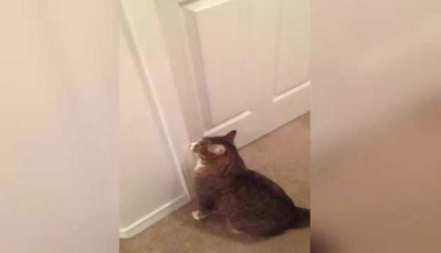 Morador de Michigan vendeu sem quer o gato de estimação de sua namorada (Foto: Reprodução/Reddit)