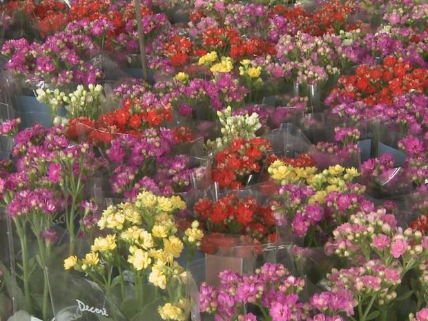 Feira de Flores de Holambra apresenta mais de 500 espécies de plantas em Rio Branco (Foto: Reprodução/Rede Amazônica Acre)