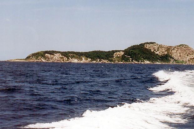 Ilha de Queimada Grande, no Brasil (Foto: Prefeitura Municipal Itanhaém/ Flickr)
