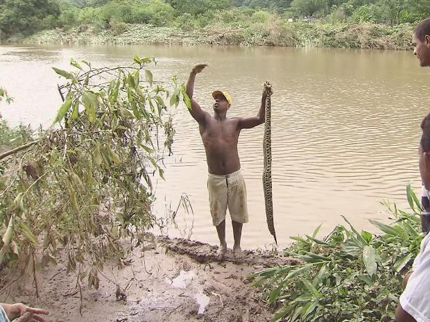 Morador encontra cobra em Cubatão (Foto: Reprodução/ TV Tribuna)