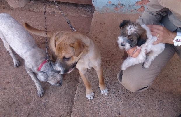 Bombeiros resgatam cães em casa após eletrodoméstico pegar fogo em Planaltina, Goiás (Foto: Divulgação/Corpo de Bombeiros)
